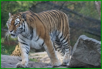 animals-1060593_640.jpg