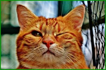 cat-1333926_640.jpg