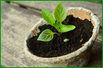 plant-786689_640.jpg