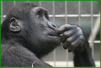 primate-1019101_640.jpg