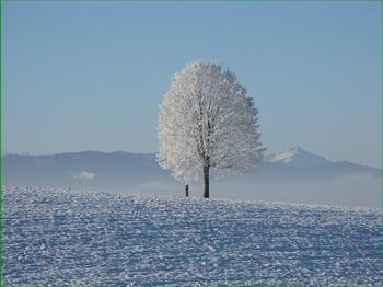 winter-198447_640.jpg